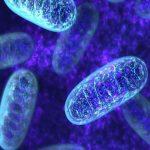 Luz mitocondrial ¡Liberate del karma de familia!